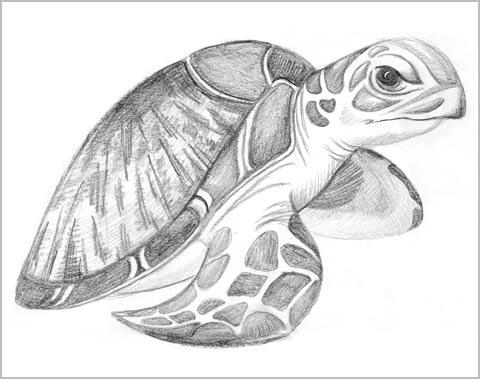 Scribble Schildkröte